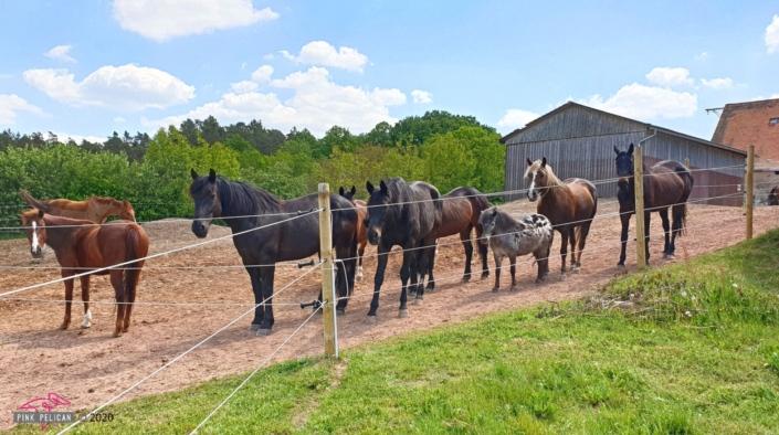 Pferde auf der Koppel am Wehlenberg