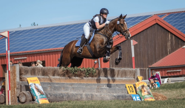 Pferd springt über ein Hindernis
